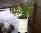 Tiny White Rose Bud Motif Planter with Live Miniature Plant