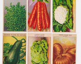 Botanical prints 24 vintage Labels for Vegetable Seed Packets (Set B)