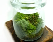 Medium VIBE JAR, Terrarium, Moss and Lichen. Terrariums by mossterrariums on Etsy