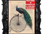 Peacock print - Peacock art - peacock bike