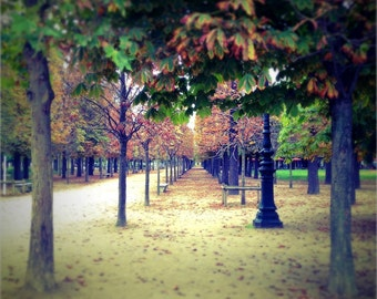 Paris Photography, French Decor, Parisian Decor, Jardin Du Tuileries, Garden, Paris Art, Winter time, Color Fine Art Photography, 8x10