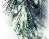 Peace & Joy - winter photography, green and white snow covered pine bough, fantasy forest nature country holiday  -  9X12