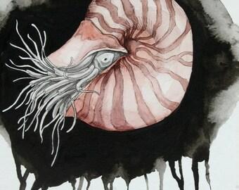 Emperor Nautilus - Original Illustration