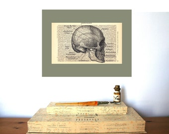 Anatomical Skull Sideface Vintage Art Print on Antique 1896 Dictionary Book Page