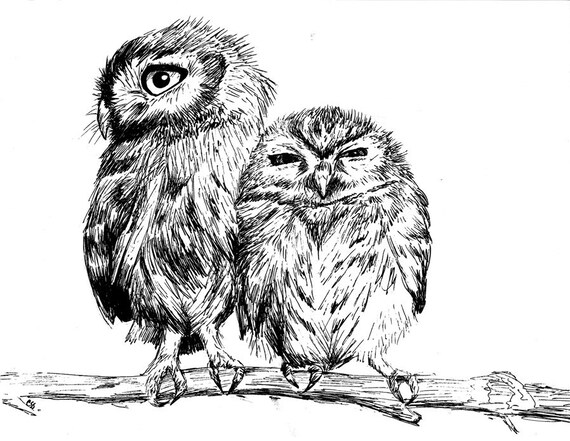 Burrowing Owls on Branch - Pen and Ink Print, 5x7