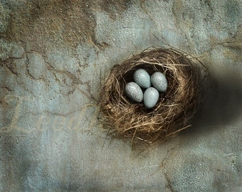Speckled Eggs - Vintage Style Original Photograph - Bird Nest Textured Distressed Home Decor Nature Collection