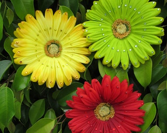 SALE- Yellow Red or Green Gerber Daisy hair flower