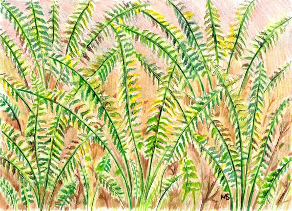 "Fern Art, Original Drawing, Woodland Wall Art, Fern Wall Decor, Color Pencil, Pen and Ink 5x7"" Fern Drawing"