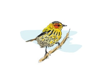 Cape May Warbler - 8x10