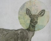 Artists Proof - Floral Halo - Black-Tailed Deer Etching 2