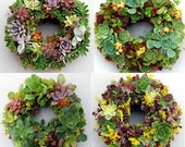 "Succulent Wreath Custom 9"" (Your choice of succulents)"