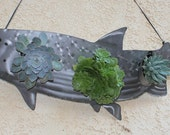 Awesome Steel Metal Fish Salmon Trout Succulent Living Wall Art Sculpture frame includes 6 succulents  great wedding gift