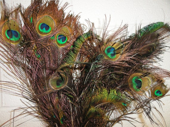 Peacock Feathers, Natural Brilliant Genuine Peacock Feathers, Sixty Feathers