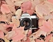 Camera Print, Vintage Camera Art, Vintage Camera Decor, Autumn Art Print, Still Life Camera Photography Print, Retro Camera Poster, Pentax