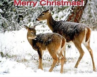 Christmas Card, Cards, deer, wildlife, merry Christmas, Ellen Strope, digital photography, castteam, snow, doe, whitetail deer, deer decor
