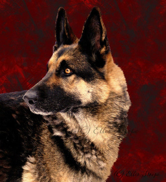 PHOTO CARD, German Shepherd, dogs, dog decor, red, black, note cards, cards, blank cards, Ellen Strope
