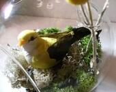 Yellow Bird Terrarium