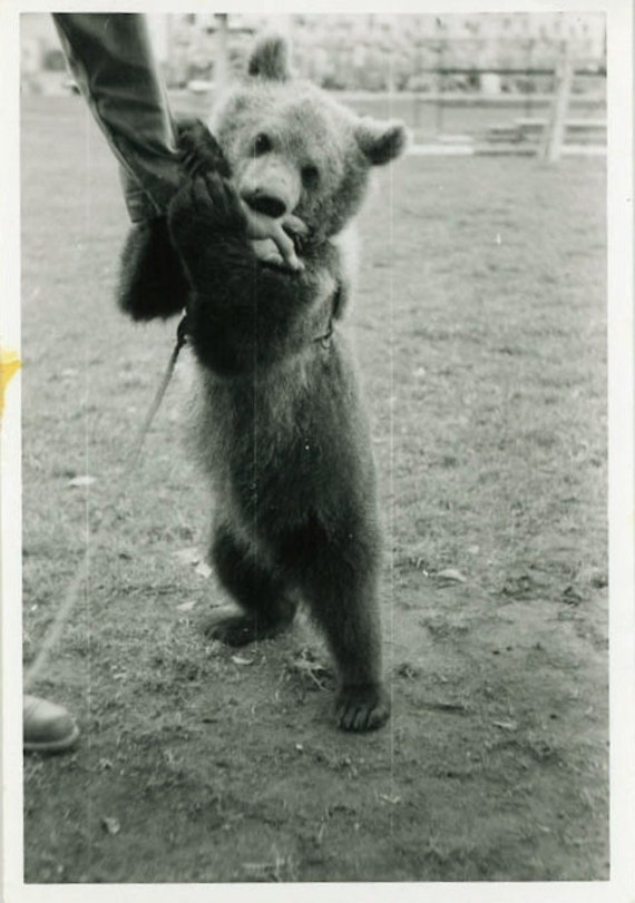 "Vintage Photo ""Baby Bear"", Photography, Paper Ephemera, Snapshot, Old Photo, Collectibles - A004"