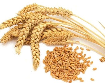 10 LB Totally organic Wheat Seeds ( for:  Wheat Grass, CatGrass, Sprouting, Grow or store ) Fast Shipping !