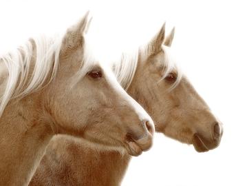 Horse photograph, nature photography, equine, buff, cream, sepia tone, animals, farm, horse farm, dreamy,glowing, fine art photograph 8x10