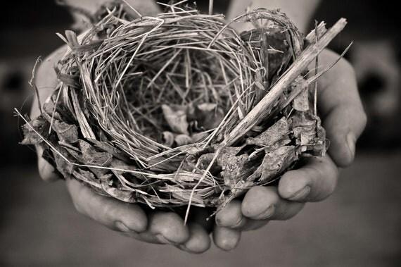 nest, 8x10 fine art black & white photograph, nature, gift, hands, love