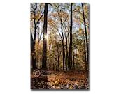 Woodland Autumn Landscape Print, Tree photography, Sunburst, blue, yellow, Home decor, 5x7 inch