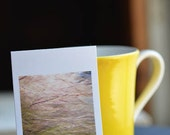 Golden Grasses - Petite Print Photo
