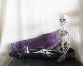 Vintage Violin Case Shabby French Cottage Primitive Halloween Skeleton Purple
