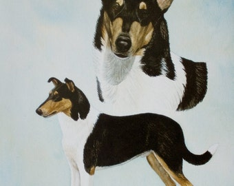 Limited Edition Smooth Collie print by Cindy Alvarado
