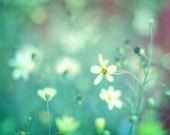 Flower Photography, Aqua Mint Teal Wall Art, Impressionistic Floral Print, Soft White Flowers Photo, Unisex Nursery Decor, 8x10, 11x14 Print