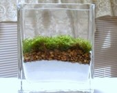 TERRARIUM, Moss Terrarium,  Modern Terrarium, Glass Terrarium, Housewarming