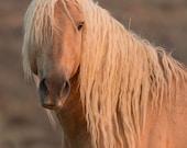 Corona's Portrait - Fine Art Wild Horse Photograph - Wild Horse - Corona