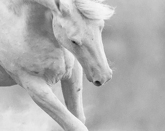Cremosso Plays II - Fine Art Wild Horse Photograph - Wild Horse - Cremello Colt - Black and White