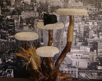 shiitake cat tree