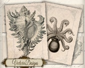 Treasures of the Sea ATC vintage images digital background instant download printable collage sheet VD0132