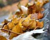 Autumn golden leaves, Fall photograph, Dry leaves, Autumn home deocr, 10x8, Giclee print - titled: Autumn Impressions IV