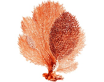 Sea Fan Coral Red Orange Nautical Vintage Style Art Print Beach House Decor