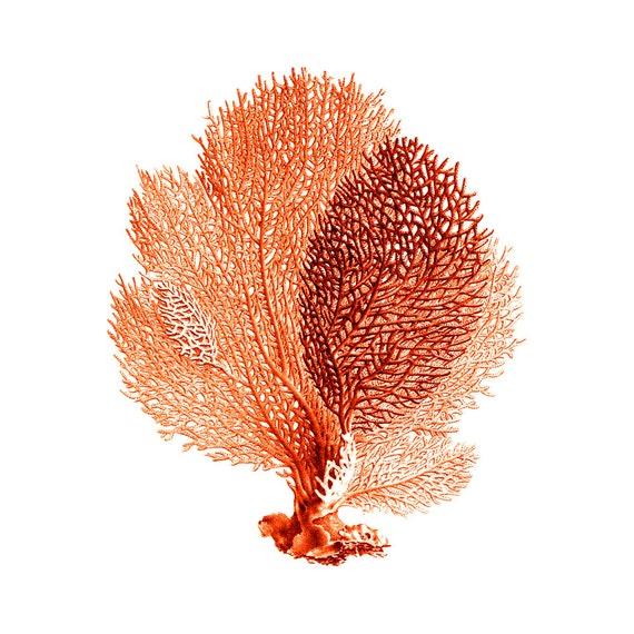 Sea Fan Coral Red Orange Nautical Vintage Style Art Print Beach House Decor
