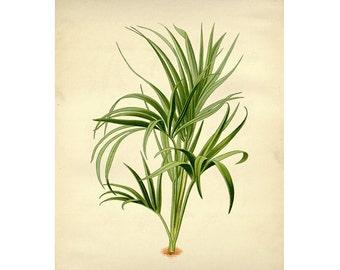 Vintage Botanical Floral Leaf/Greens Series Plate 2 Digital Download: 8x10, specimens, vntage-look, printing and framing, decoupage