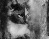 Beautiful Kitten Photo Vintage Look Fine Art Photo Card size 4.5 x 5.81 - MojavePhotography