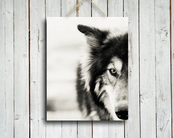 The Wolf -  Canvas - 11x14 in. Wolf decor- wolf art - wolf dog- wolf photography - wolf decoration - native american - man cave