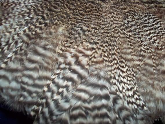 bard animal - photo #47
