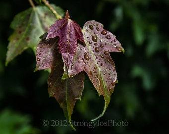 rain and leaves, tree photography, 8x12 fine art photo print StrongylosPhoto, Asheville, Blue Ridge Parkway, North Carolina