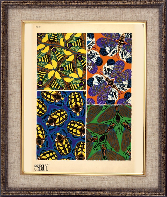 Insects-Bugs-Wings of a butterfly-1920-1930-Parisian studio-Unusual composition-Pattern-Print