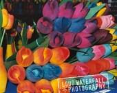 Bright, Vivid, Wooden Tulips, Flowers Still Life, Fine Art Photography 8x8 10x10 12x12 20x20 Fine Art Photographic Print