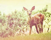 Deer Photography - Dreamy Doe - Beauty Bambi - Secret Garden - Nature - Fine Art Photograph