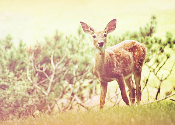 Deer Photography,  Dreamy Doe, Bambi Wall Art, Secret Garden, Nature Photo, Animal Wall Art, Modern Art, Office Decor, Fine Art Photograph