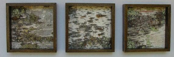 Birch Triptych Art, Birch Bark, Modern,Minimalist, urban, Rustic, shaby chic