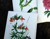 Handmade invitations Watercolor Botanicals Set of 6