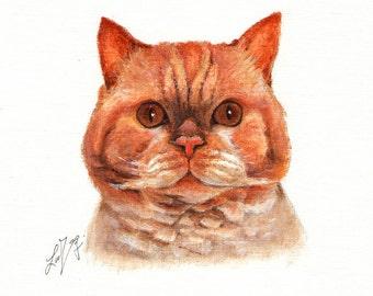 Original Oil CAT Portrait Painting SELKIRK REX Art On Canvas Kitten Signed